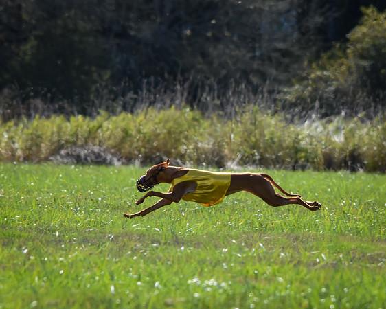 satfinalpharoahhound1-15