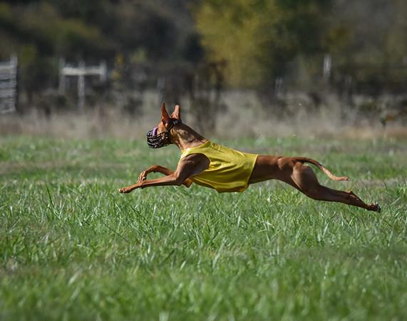 satfinalpharoahhound1-14