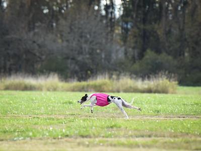 sunbobgreyhound-17