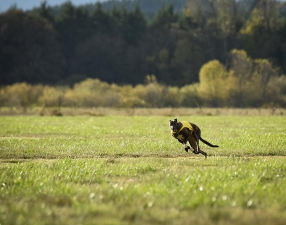 sunbobgreyhound-9