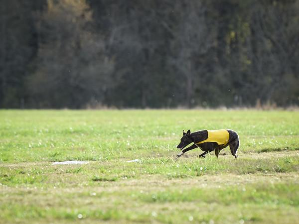 sunbobgreyhound-21