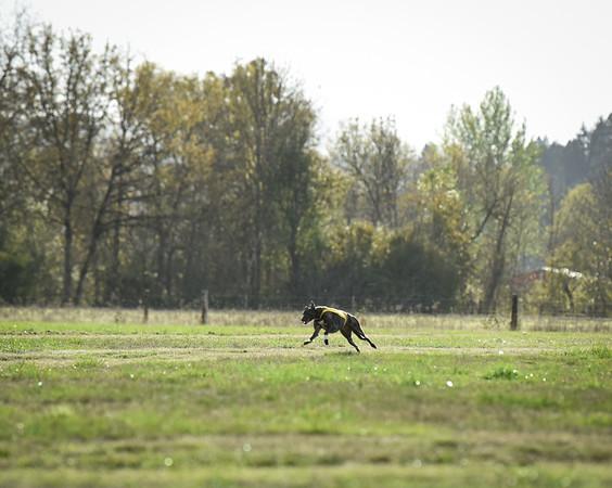 sunbobgreyhound-19