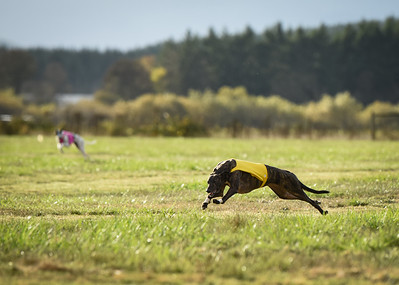 sunbobgreyhound-11