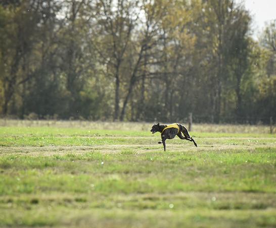 sunbobgreyhound-20