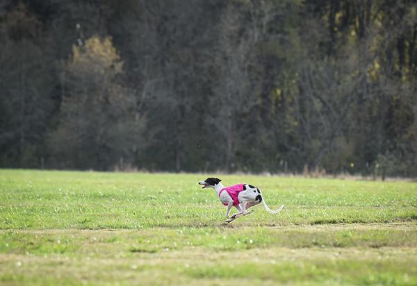 sunbobgreyhound-15