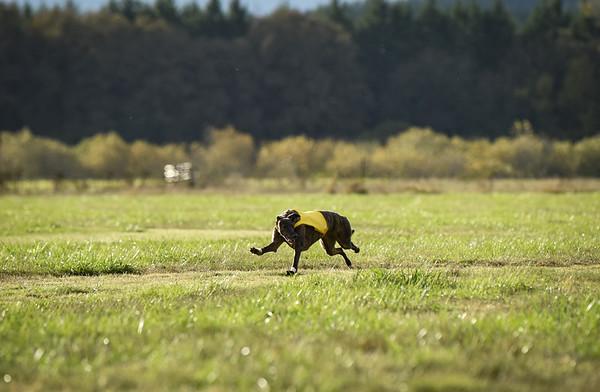 sunbobgreyhound-10