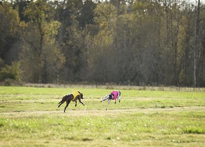 sunbobgreyhound-4