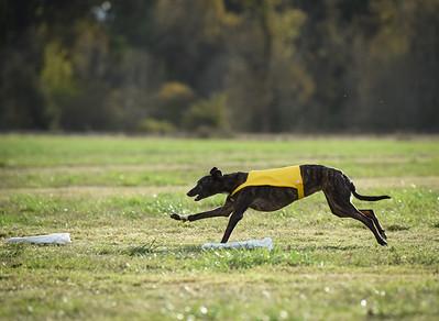 sunbobgreyhound-12