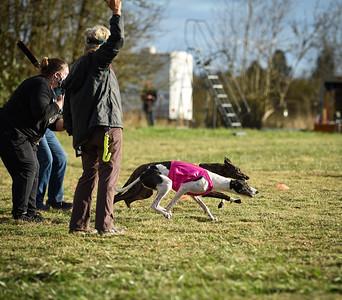 sunbobgreyhound-1