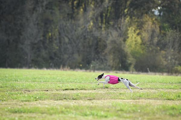 sunbobgreyhound-14