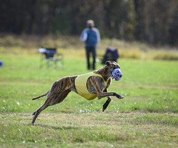 sunfinalgreyhound1-12