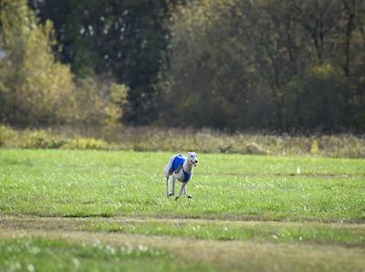 sunfinalgreyhound1-11