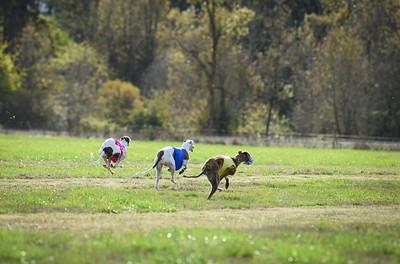 sunfinalgreyhound1-5