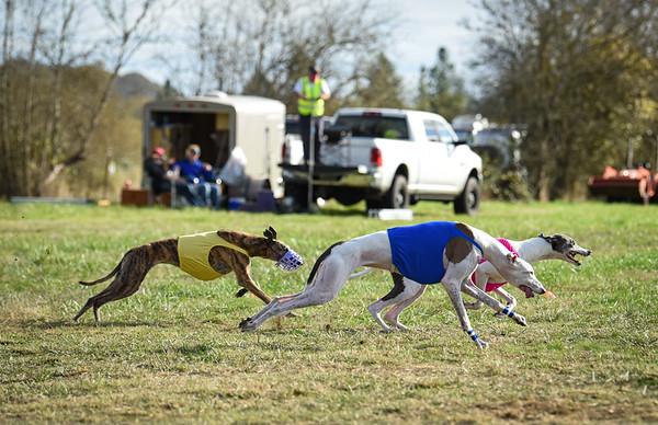 sunfinalgreyhound1-3