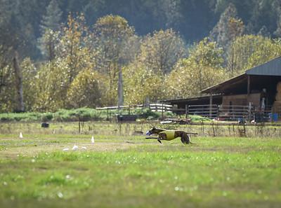 sunfinalgreyhound1-18