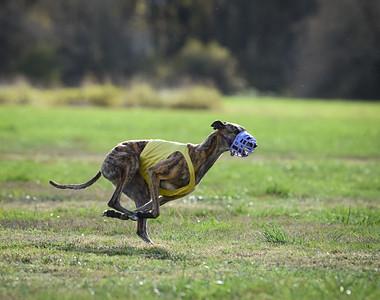 sunfinalgreyhound1-13