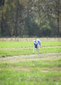 sunfinalgreyhound1-24