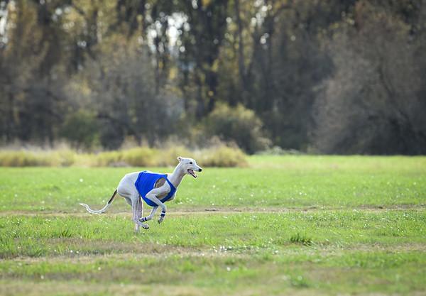 sunfinalgreyhound1-15