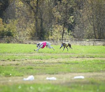 sunfinalgreyhound1-22