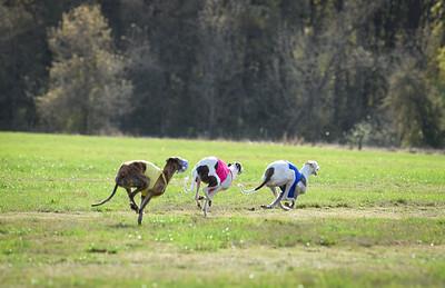 sunfinalgreyhound1-4