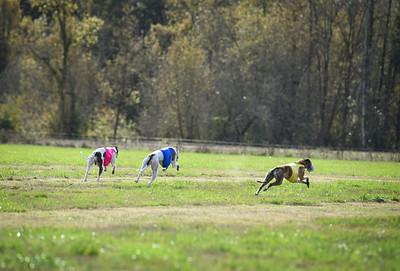 sunfinalgreyhound1-6