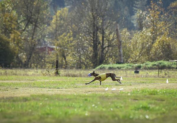 sunfinalgreyhound1-20
