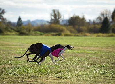 sunfinalgreyhound2-3