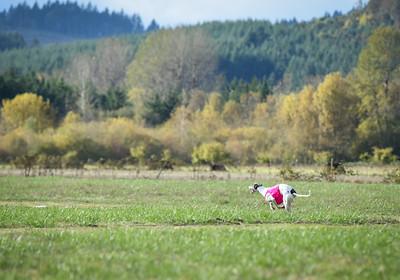 sunfinalgreyhound1-17