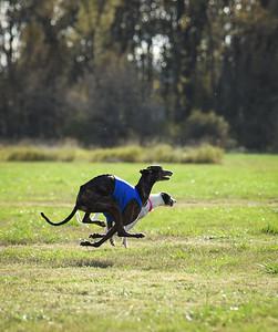 sunfinalgreyhound2-4