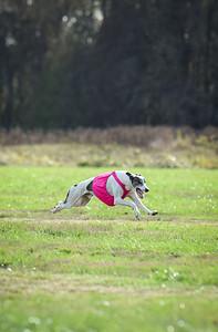 sunfinalgreyhound1-10