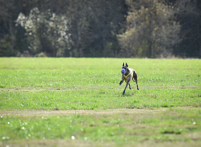 sunfinalgreyhound1-25