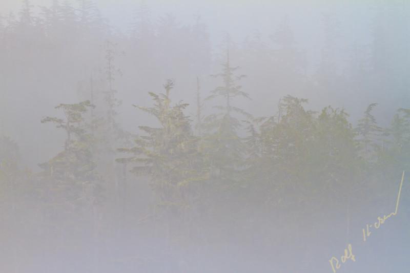 Fog along the coast of the Great Bear Rainforest coast in British Columbia, Canada.