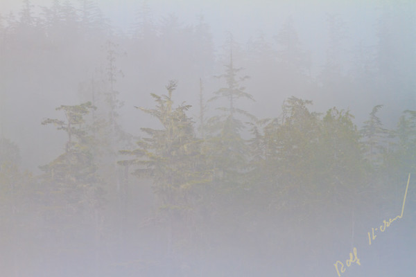 Fog along the coast of the Great Bear Rainforest coast in British Columbia, Canada.
