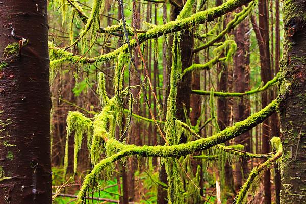 Rainforestin Cape Scott Provincial Park on the west coast of Vancouver Island, British Columbia, Canada.