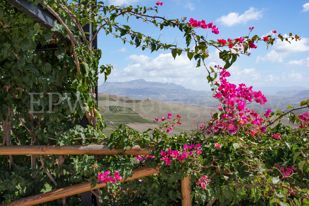 Sicily Vineyard 1