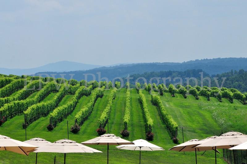 Stone Tower Vineyards