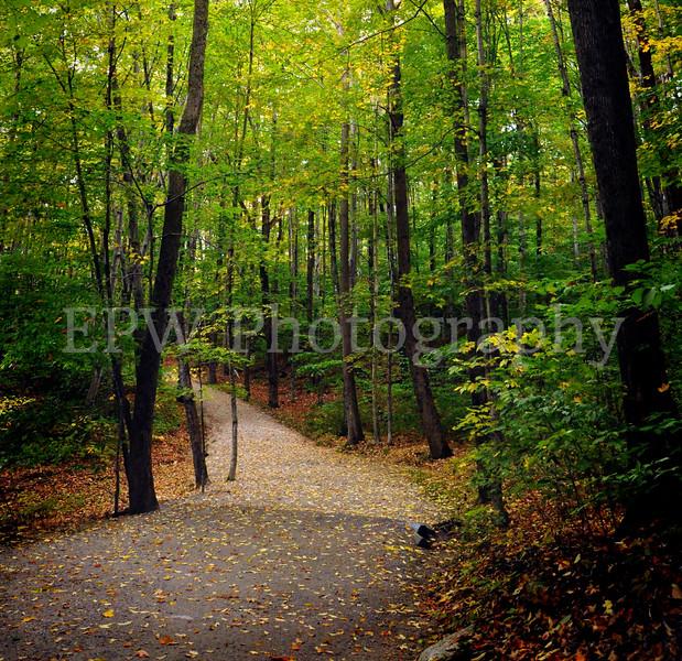 Autumn in New Hampshire VIII