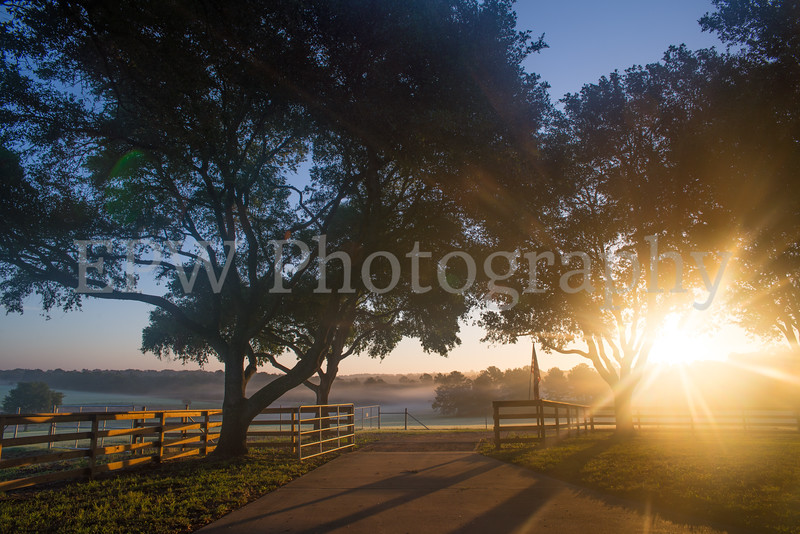 Tinsleon Ranch Sunrise II