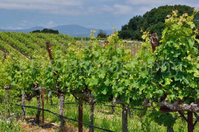 Napa Wine Country II