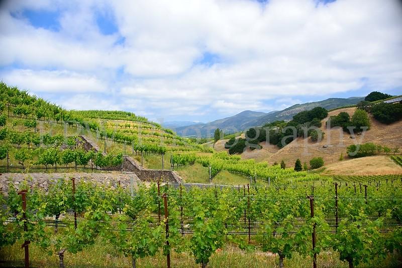 Napa Wine Country III