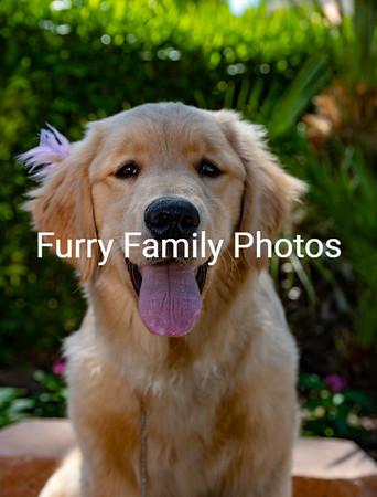 Emmie Puppy Shoot 1