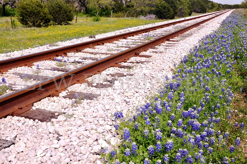Bluebonnets and Rails