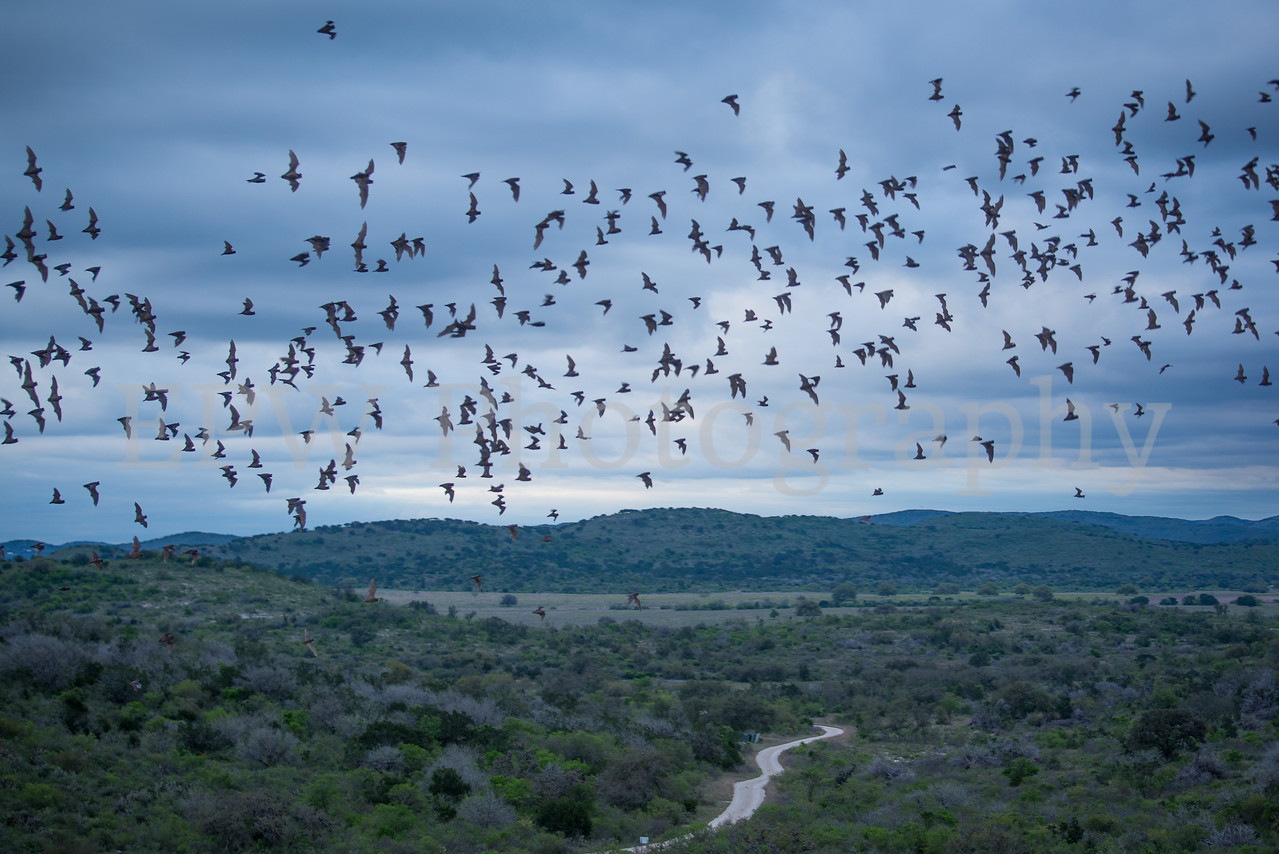 Hill Country Bats