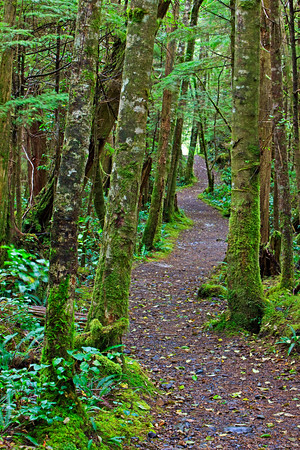 Trail to San Josef Bay, Cape Scott Provincial Park, Northern Vancouver Island, Vancouver Island, British Columbia, Canada.