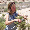 Sarah Hunkins collecting seed. Photo by BLM NV052.