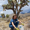 Sarah Hunkins collecting seed at Wheeler Pass Rd. Photo by BLM NV052.