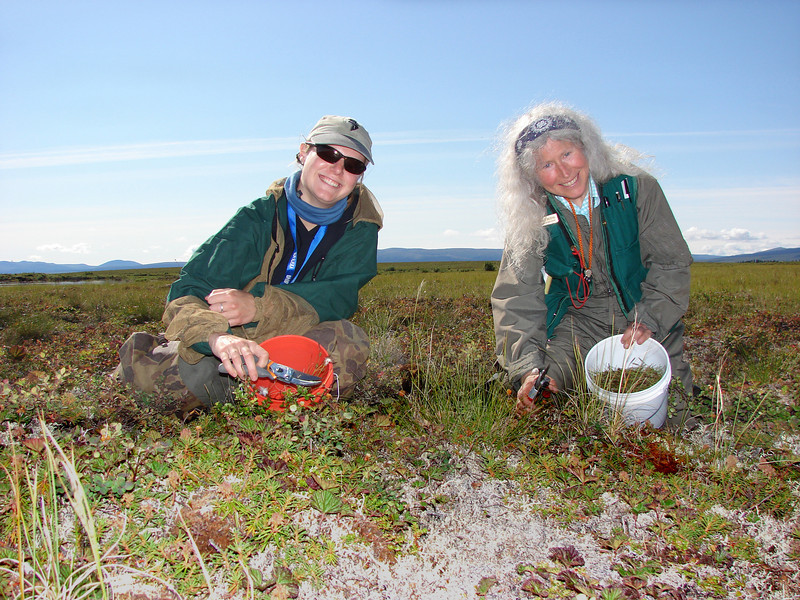 Ann Claerbout (Alaska State Office) and Randy Meyers (Central Yukon Field Office) collecting sedges along drained lake beds in northwestern Alaska for the Seeds of Success Program. Photo by BLM AK.