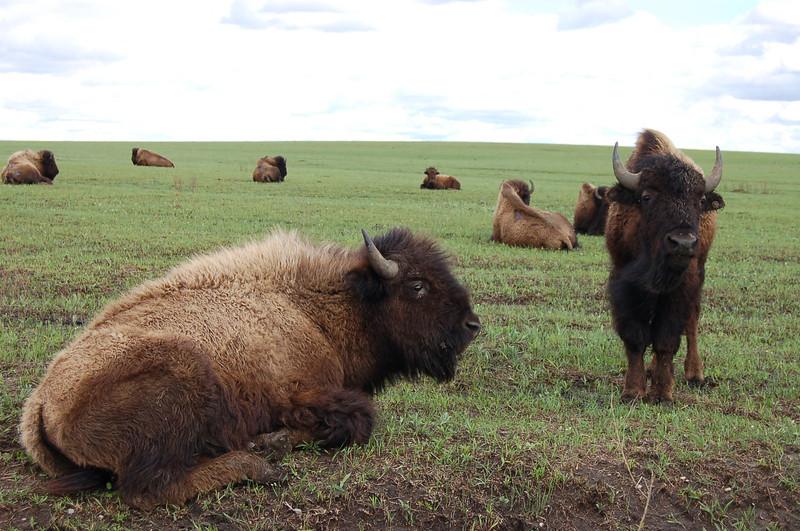 Tallgrass Prairie Preserve, Oklahoma.  Photo by CBG, Steve Winter