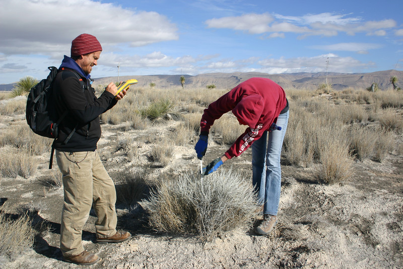 CBG Interns Jeremy McClain and Margaret Noll taking GPS and size measurements for Lepidospartum burgessii (Burgess' broomsage).
