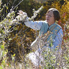 Alderleaf mountain mahogany - Cercocarpus montanus (CEMO2) being collected by Carol Dawson in Colorado. Photo by BLM CO.